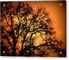 Acrylic Print featuring the photograph Tree Bursting With Setting Sun by Cindy Wright