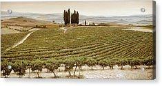 Tree Circle - Tuscany  Acrylic Print by Trevor Neal