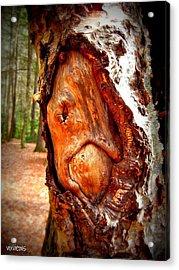 Tree Face Acrylic Print by Vix Views