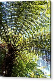 Acrylic Print featuring the photograph Tree Fern by Peter Mooyman