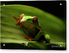 Tree Frog 10 Acrylic Print by Bob Christopher