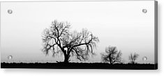 Tree Harmony Black And White Acrylic Print by James BO  Insogna