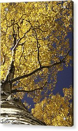 Tree Hugger Acrylic Print by Justin  Curry