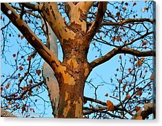 Acrylic Print featuring the photograph Tree In Camo by Rachel Cohen