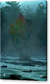 Tree In Fog Acrylic Print