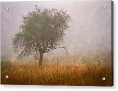 Tree In Fog Acrylic Print by Debra and Dave Vanderlaan