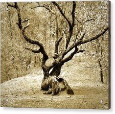 Tree In The Forest Acrylic Print by Susan Leggett