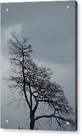 Acrylic Print featuring the photograph Tree by Jerry Cahill