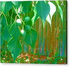 Tree Leaves Acrylic Print by Juliana  Blessington