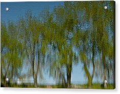 Tree Line Reflections Acrylic Print