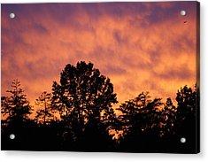 Tree Lined Skies Acrylic Print by Maria  Wall