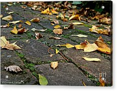 Tree Litter  Acrylic Print by Susan Herber