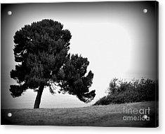 Tree Acrylic Print by Nicky Dou