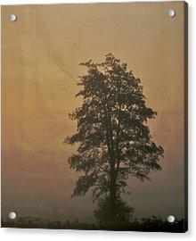 Tree Acrylic Print by Odd Jeppesen