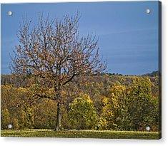Tree Acrylic Print by Odon Czintos