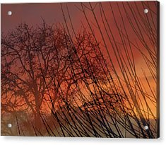 Tree Of Life Sunset Acrylic Print by Cindy Wright
