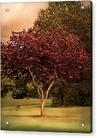 Tree Of Love Acrylic Print by Jai Johnson