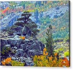 Tree On A Hill Acrylic Print