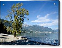 Tree On The Beach Acrylic Print