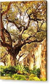 Tree Over Alamo Gardens II Acrylic Print