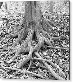 Tree Roots And Leaves Acrylic Print by Holden Richards