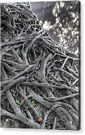 Tree Roots Acrylic Print by Natthawut Punyosaeng