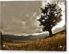 Tree Acrylic Print by Scott Askins