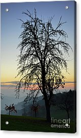 Tree Silhouette At Sunset 2 Acrylic Print by Bruno Santoro