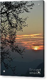 Acrylic Print featuring the photograph Tree Silhouette At Sunset by Bruno Santoro