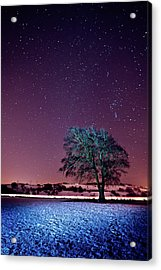 Tree Snow And Stars Acrylic Print by Paul McGee
