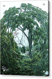 Acrylic Print featuring the photograph Tree Swirl Downpour by Glenn Feron