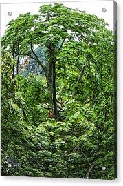 Acrylic Print featuring the photograph Tree Swirl by Glenn Feron