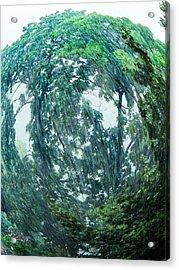Acrylic Print featuring the photograph Tree Swirl Heavy Rain  by Glenn Feron