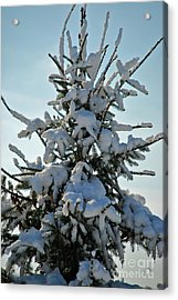 Acrylic Print featuring the photograph Tree Top by Mark Dodd