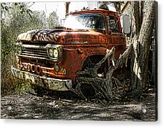 Tree Truck Acrylic Print by Peter Chilelli