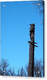 Tree Trunk Burned Acrylic Print