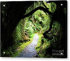 Acrylic Print featuring the photograph Tree Tunnel by Michele Penner