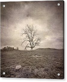 Tree Under The Rain Acrylic Print by Guido Montanes Castillo