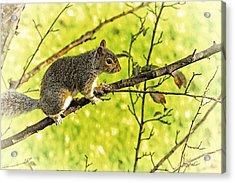 Tree Visitor Acrylic Print by Karol Livote