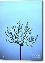 Tree With The Blues Acrylic Print