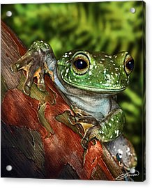 Treefrog  Acrylic Print by Owen Bell