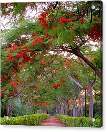 Trees And Flower In Autumn Start Acrylic Print by Zoh Beny