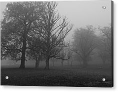 Acrylic Print featuring the photograph Trees And Fog by Maj Seda