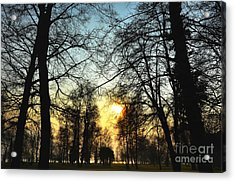 Trees And Sun In A Foggy Day Acrylic Print