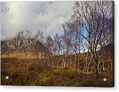 Trees Below Stob Dearg Acrylic Print by Gary Eason