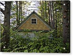 Trees Grow Up Around An Abandoned House Acrylic Print by Hannele Lahti