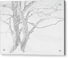 Trees In A Snow Storm Acrylic Print by David Bratzel