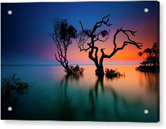 Trees In Bay At Sunset Acrylic Print by Visionandimagination.com