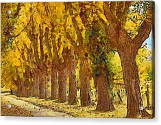 Trees In Fall - Brown And Golden Acrylic Print by Matthias Hauser