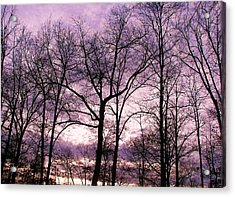 Acrylic Print featuring the photograph Trees In Glorious Calm by Pamela Hyde Wilson
